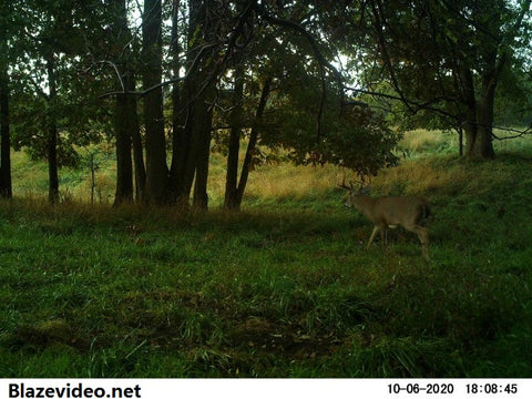 Where to Hang Trail Cameras for the Best Pictures