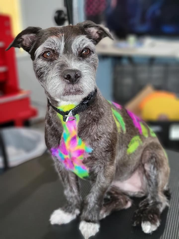 creative grooming contest with safe pet dye grooming