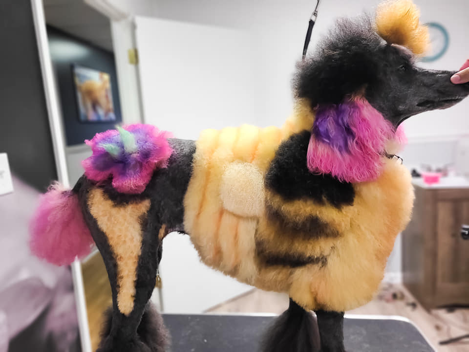 creative grooming contest with animal safe hair dye dog grooming