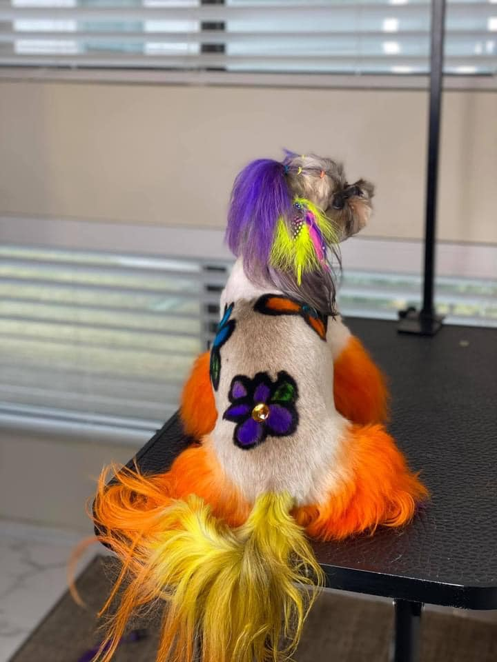 creative grooming contest with safe dog dye for creative pet grooming