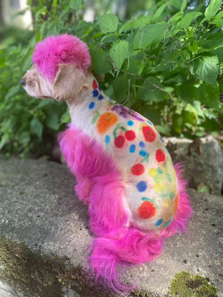 creative grooming contest with safe pet dye for creative dog grooming contest