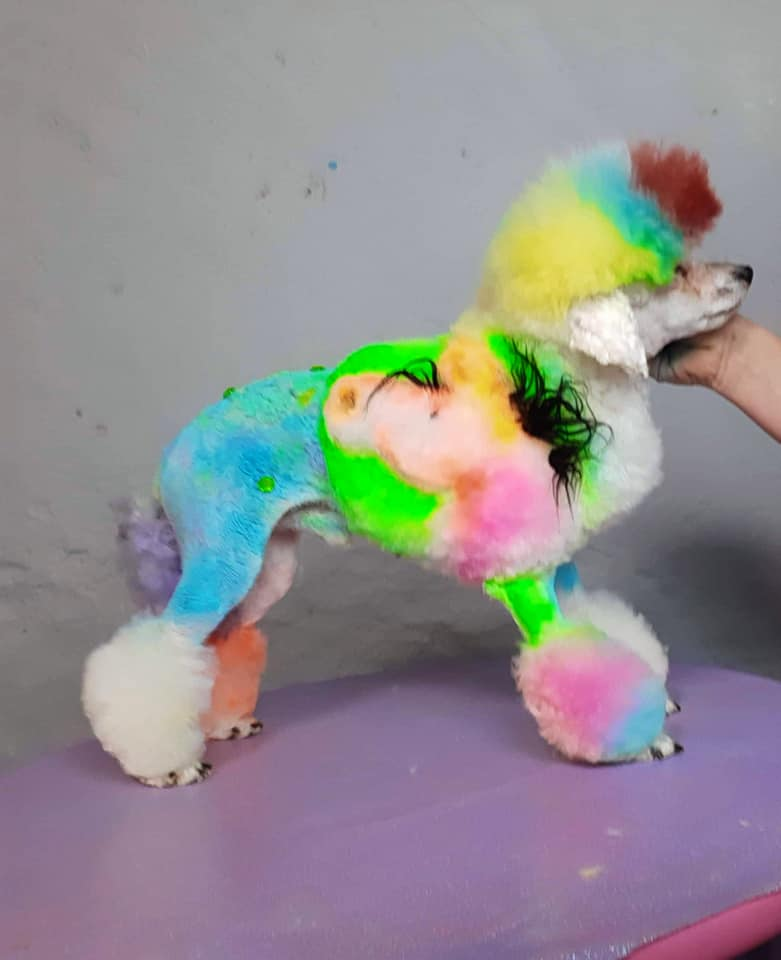 creative grooming contest with safe pet dye dog grooming
