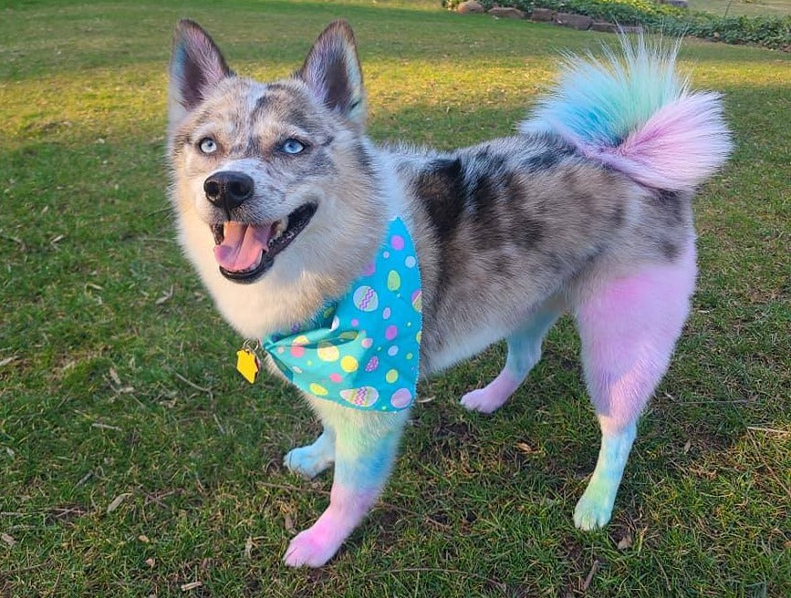 safe dog dye for creative pet grooming