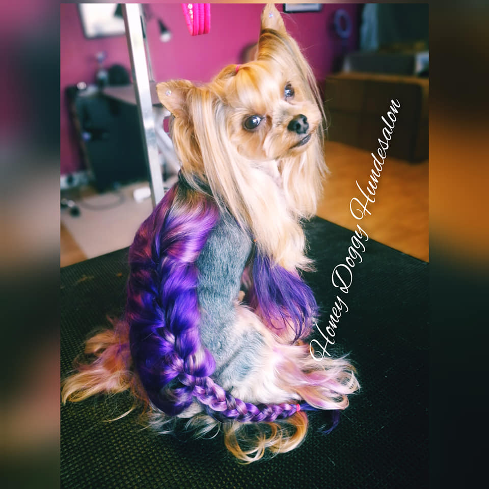 creative grooming contest with safe pet dye creative dog grooming