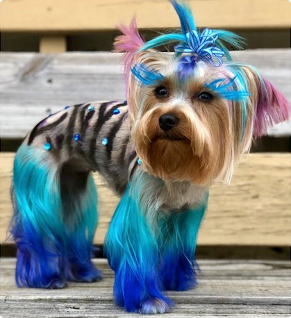 safe pet dye for creative dog grooming contest