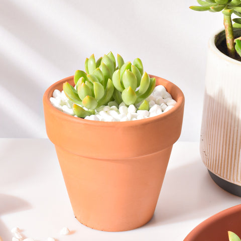 2-container-succulents-displayed-on-the-deck
