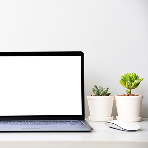 2-succulents-and-laptop