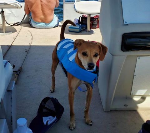 adjustable dog life jacket