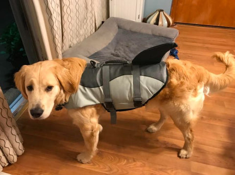 dog life jacket shark fin