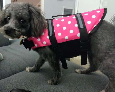 polka dot x small dog life jacket