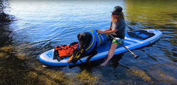 paddle boarding with dogs