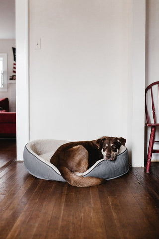False Alarm Reason: Pets or other random moving objects