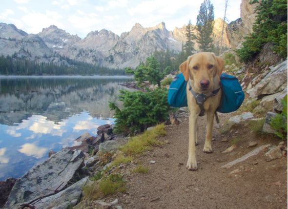 6 Tips For Camping In Winter With Your Dog