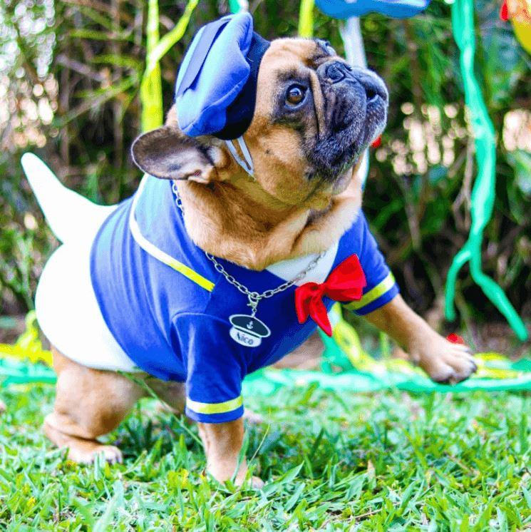 Dog Donald Duck Halloween Costume for French Bulldog- Frenchiely.com