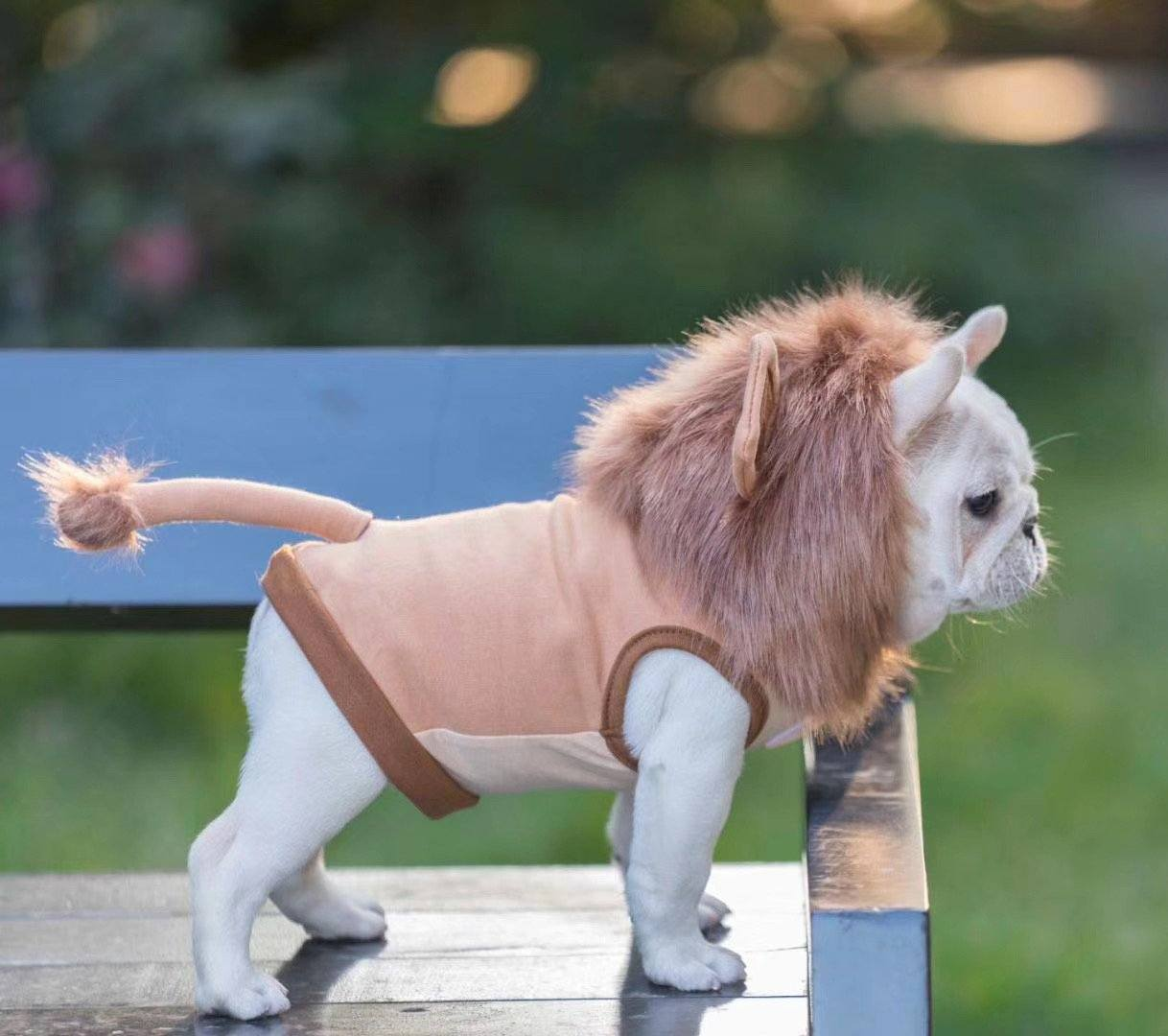 french bulldog lion costume with tail by Frenchiely.com