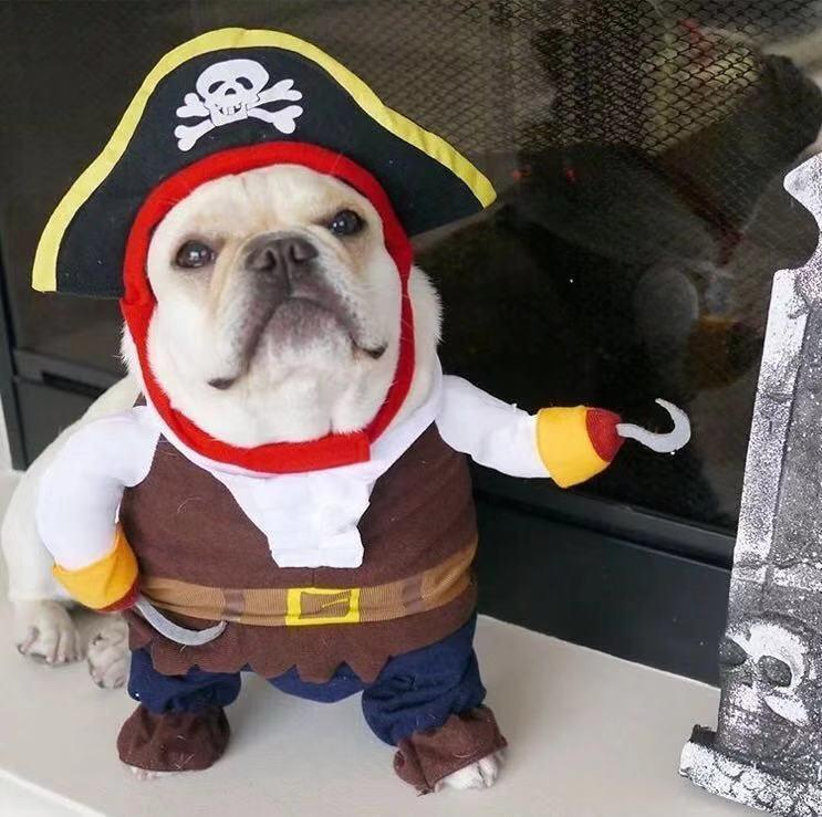 French Bulldog Pirate Costume- Frenchiely