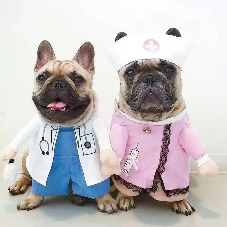 dog funny-doctor-and-nurse-french-bulldogs