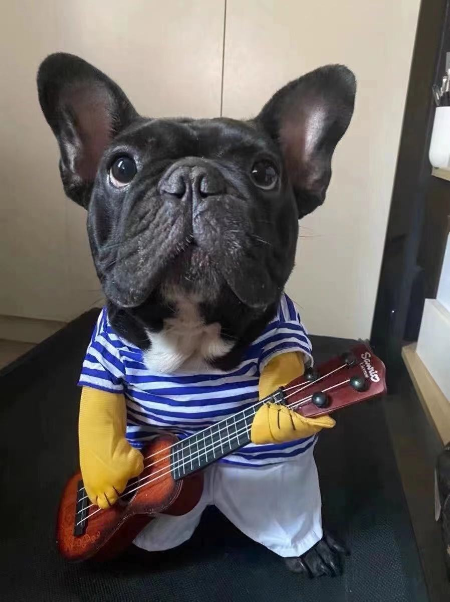 dog guitar costume for french bulldogs