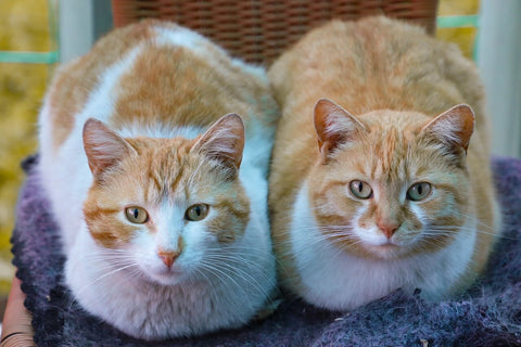 two cats cat loaf position
