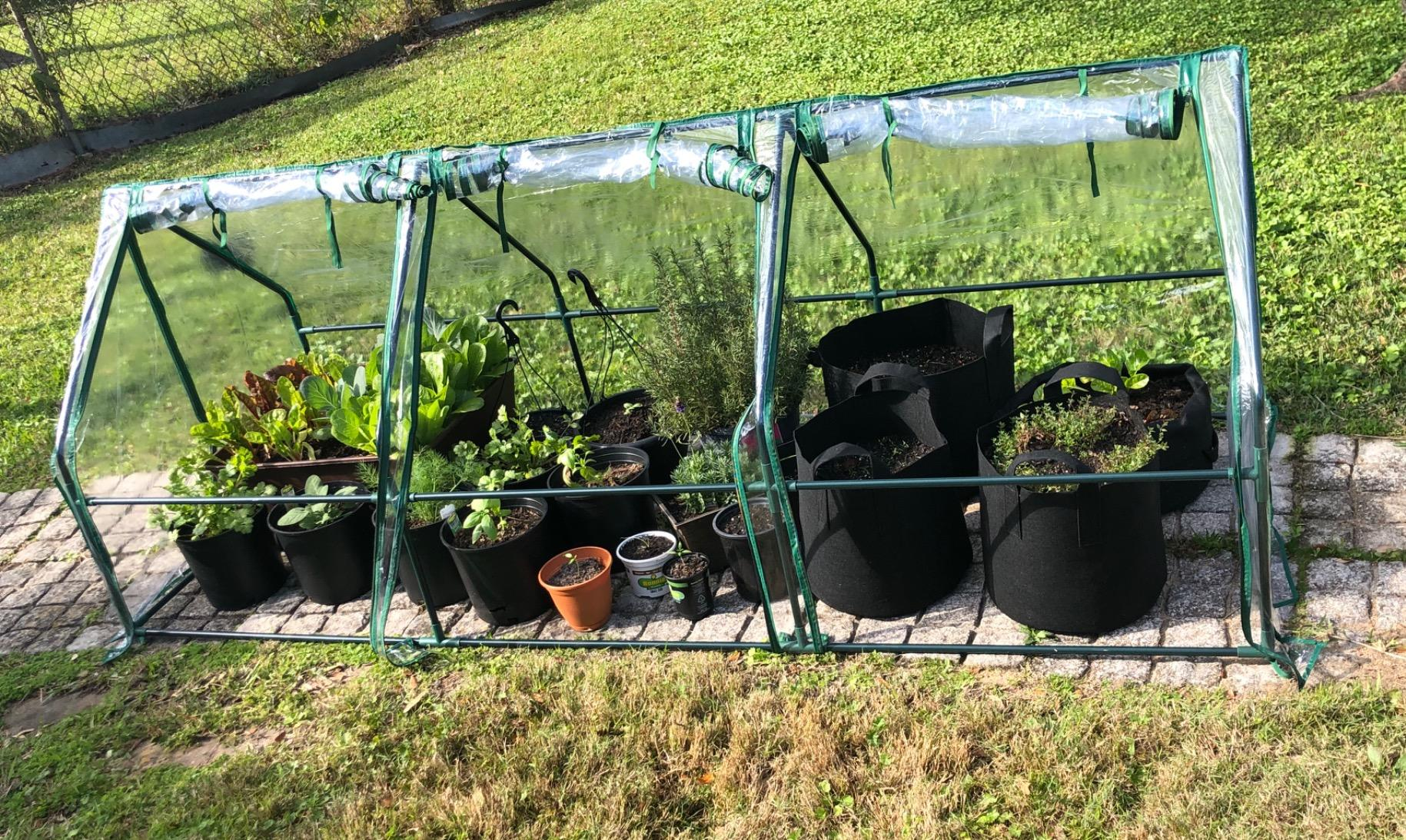 "Potted vegetables grew in Quictent 95"" x 36"" x 36"" Mini Greenhouse-2"
