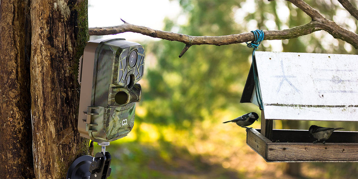 Use a trail camera to record the scenes of garden birds.