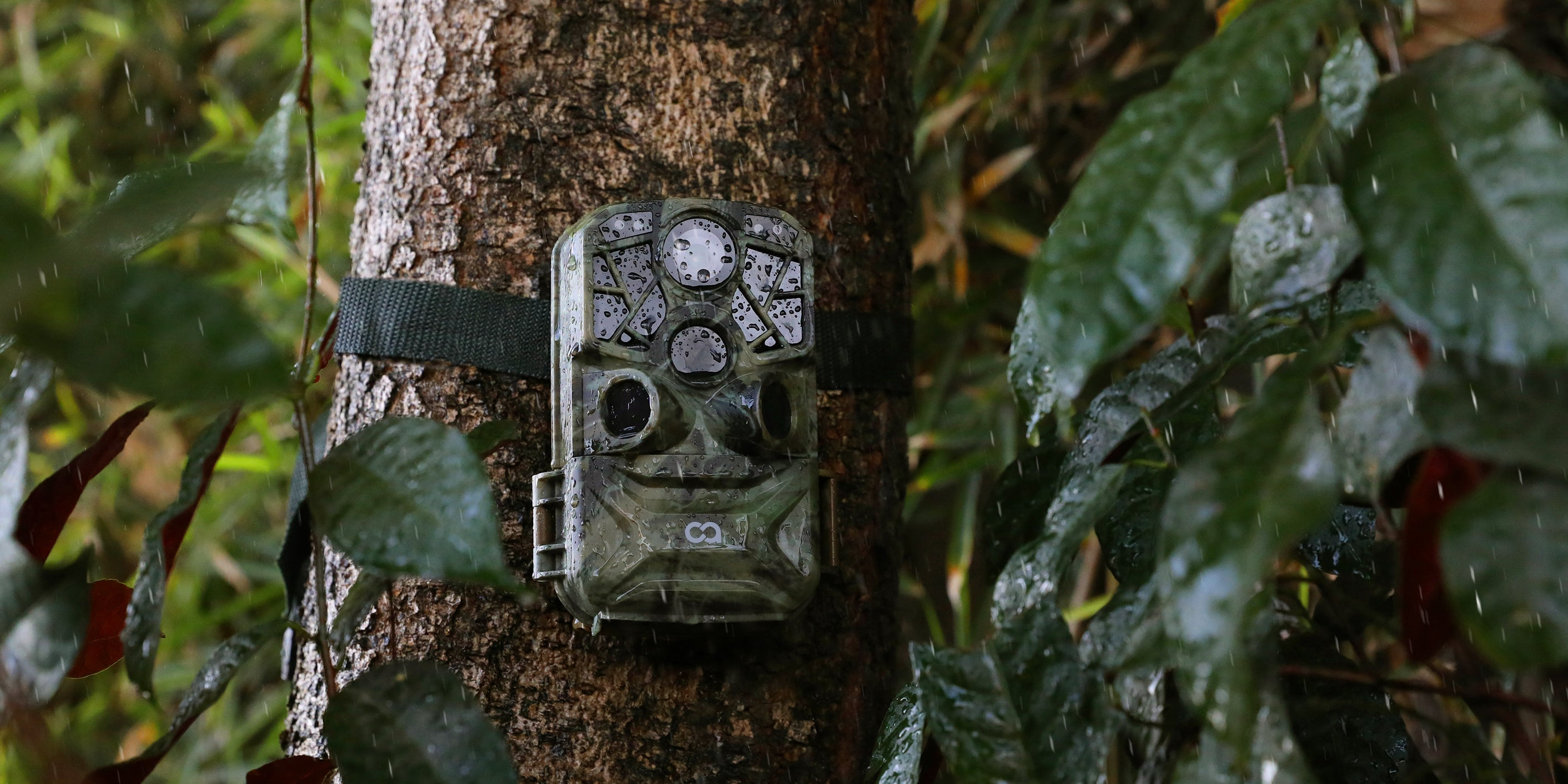 A Cooau trail camera fixed in a tree of the wilds is resisting the rain.
