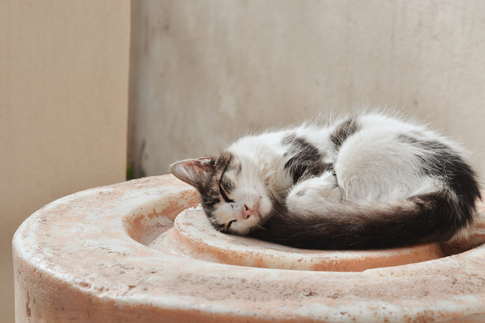 How to Train a Cat to Use Cat Litter?