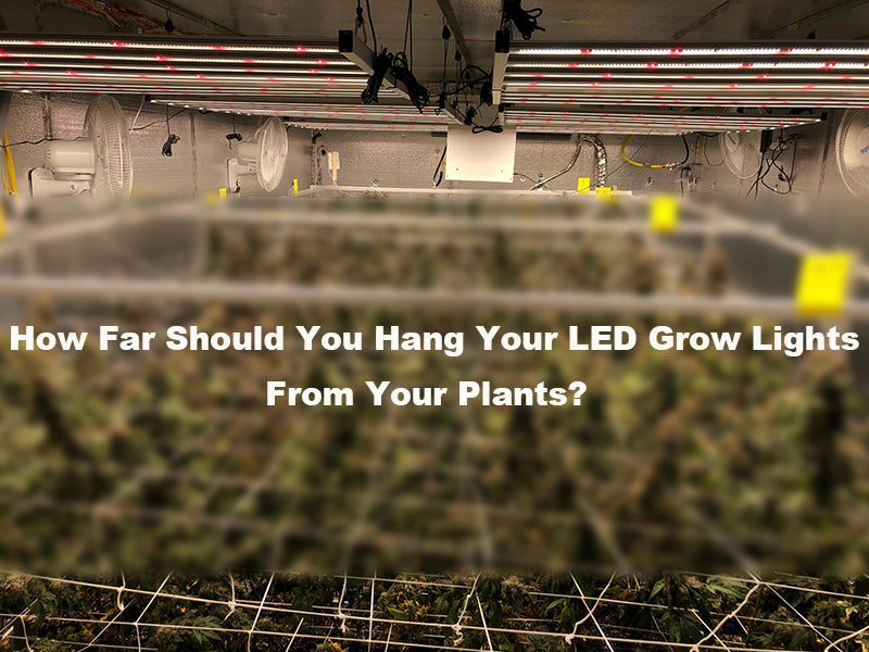 how far should led lights be from plants