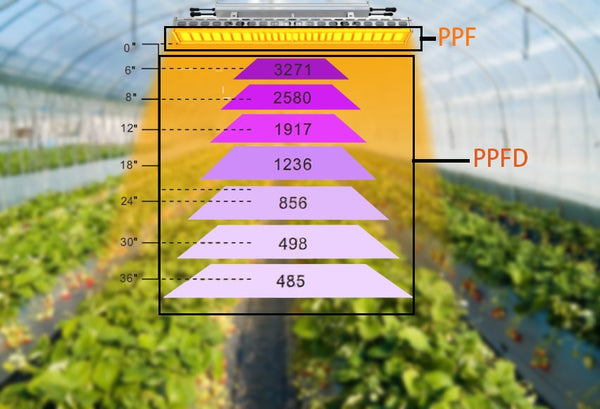 LED grow light PPF and PPFD