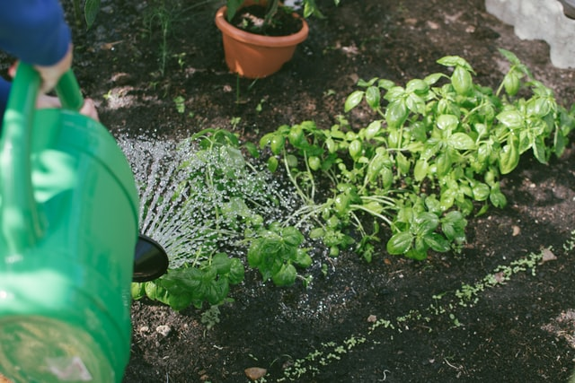 water affecting plant growth