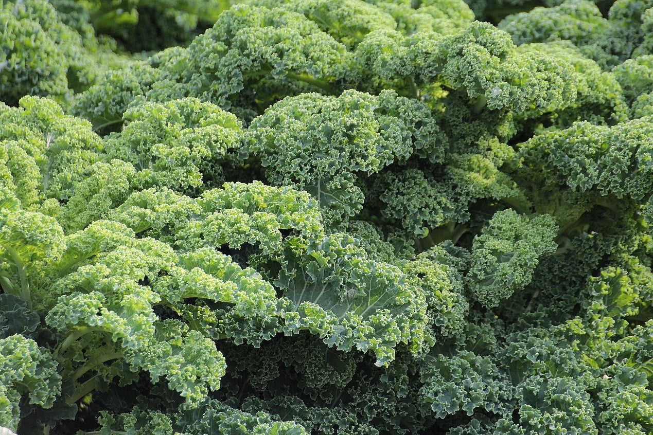 kale good food for weight loss