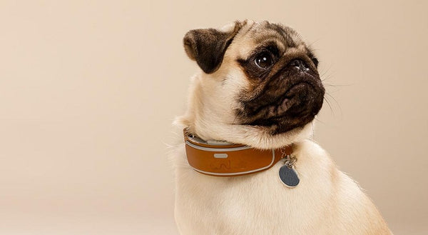 fit a dog collar