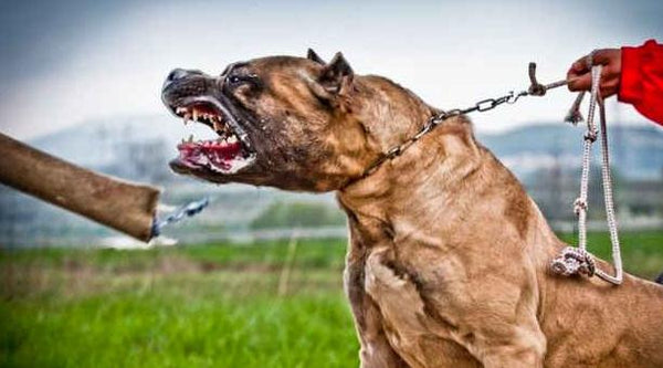 Signs of Dog Aggression