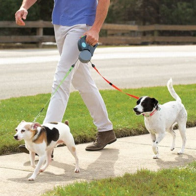dog walk on leash