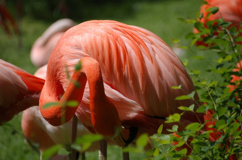 Flamingo Love, one life one love