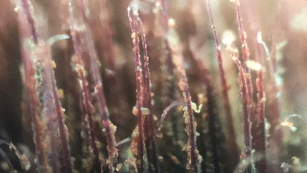brush under microscope