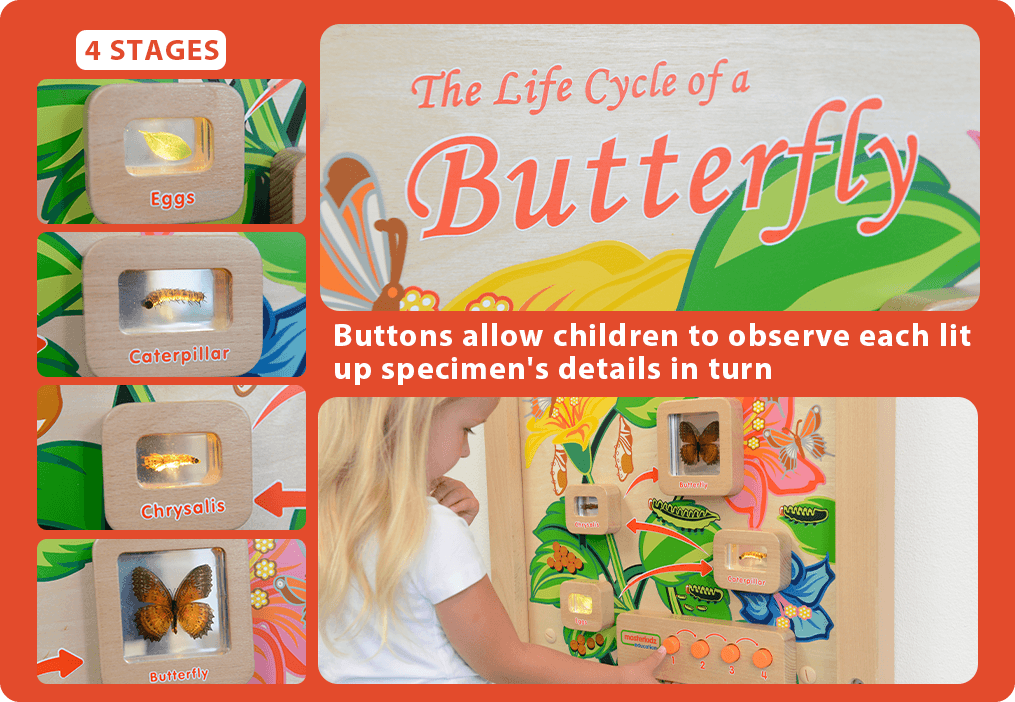 Buttons allow children to observe each lit up specimen's details in turn