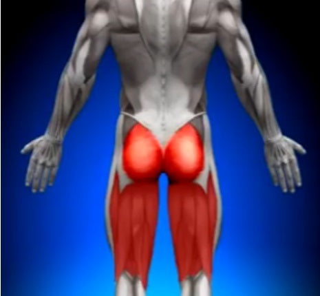 glutes and hamstrings