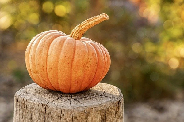 5 Things To Do in Fall