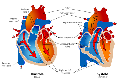 systolic blood pressure