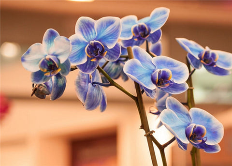 China Flower - Orchid