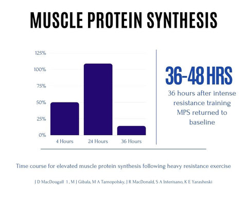 muscle protein synthesis to build muscle