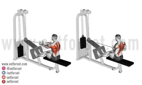 back cable exercises