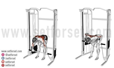 back cable machine workout