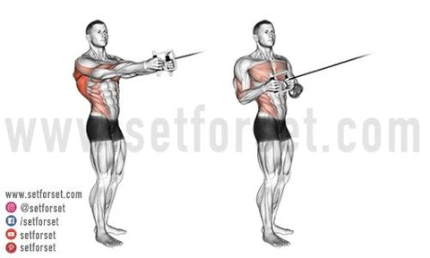 back workouts with cables