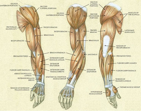 how many reps and sets to build muscle