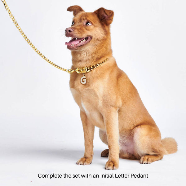 a medium sized dog wearing jewelry pendant bling tag for dogs