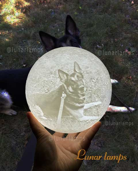 dog photo moon lamp